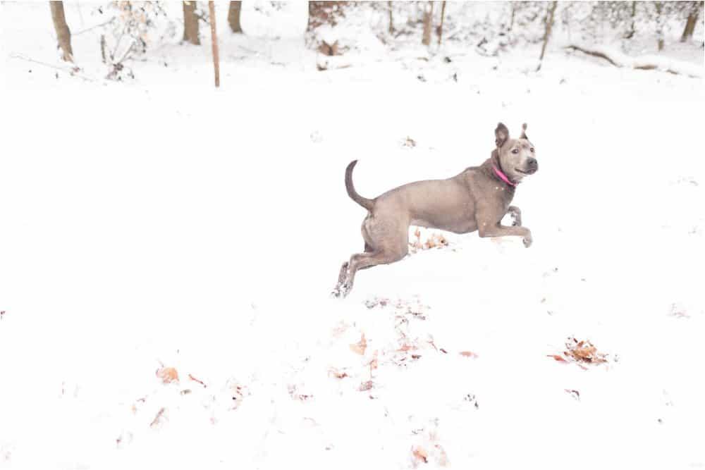 virginia snow day portrait photographer