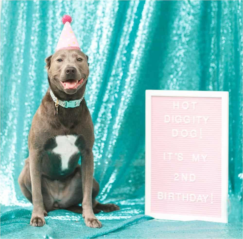 dog birthday party photos